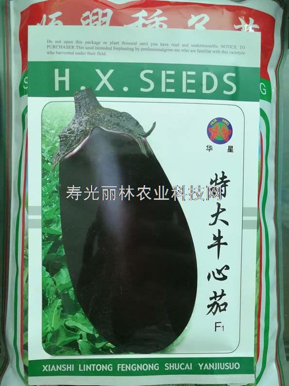 紫黑色灯泡茄子种子-茄罐种子-特大牛心茄种子