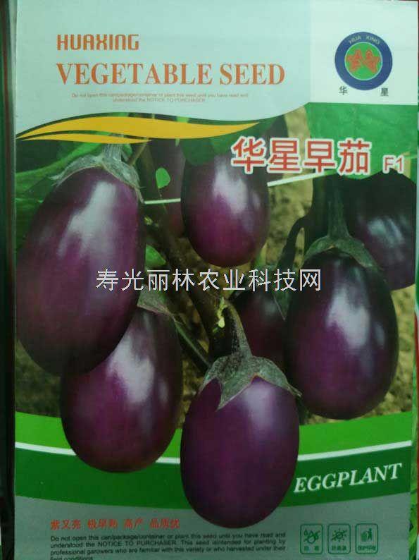 紫色灯泡茄子种子-华星早茄种子