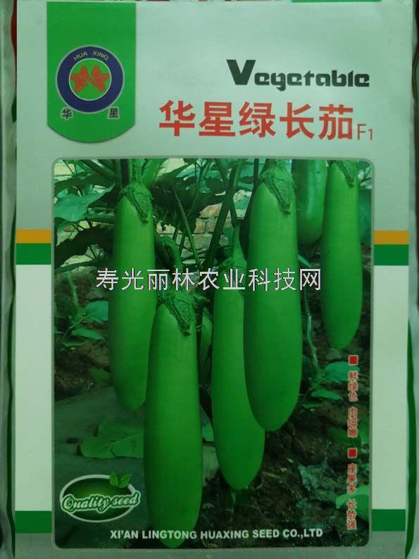 绿色长茄种子-华星绿长茄种子