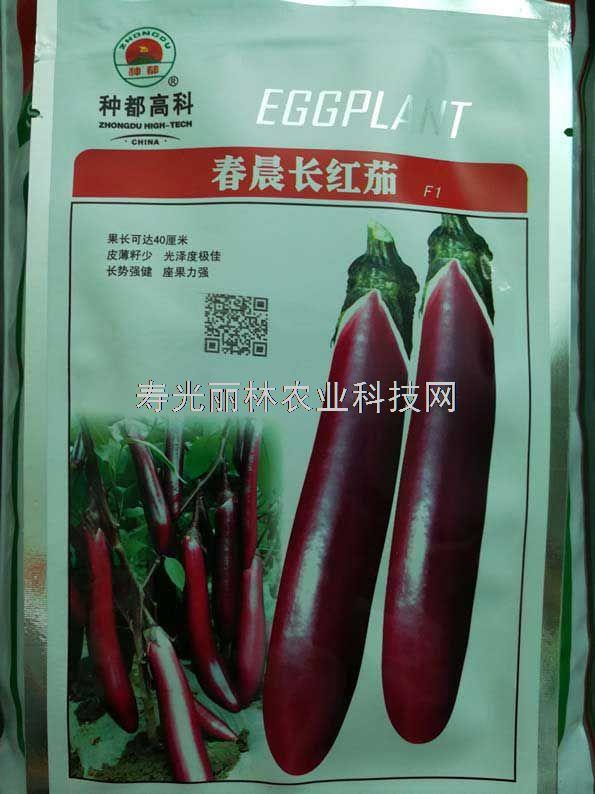 种都紫红长茄种子-春晨红长茄种子