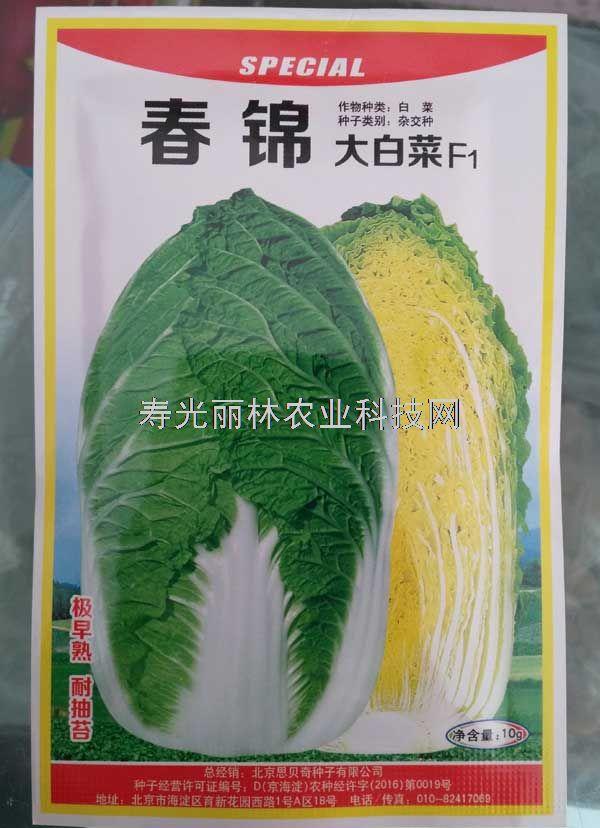 早春大白菜种子-黄芯大白菜种子-春锦大白菜种子