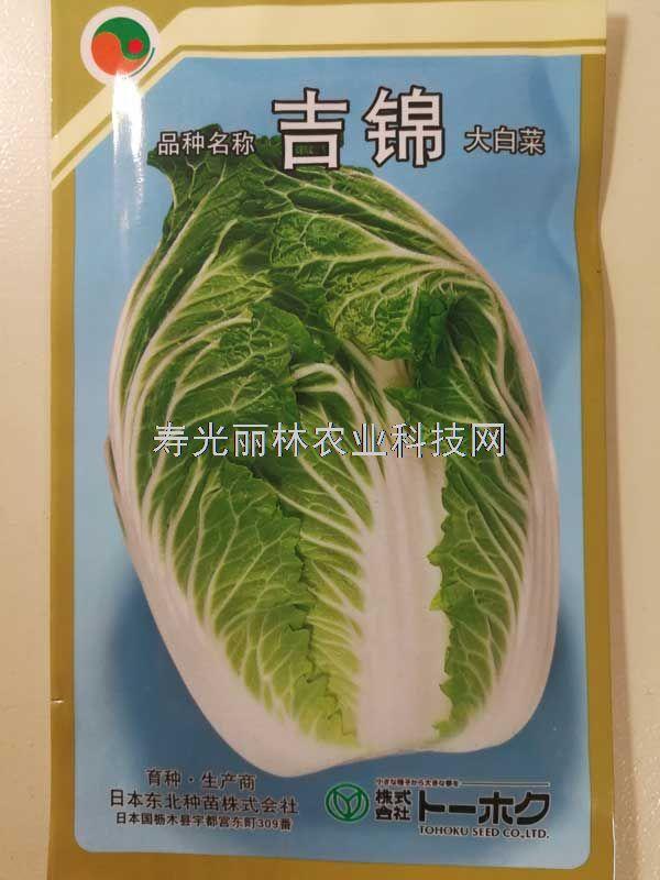 进口大白菜种子-早春大白菜种子-吉锦大白菜种子