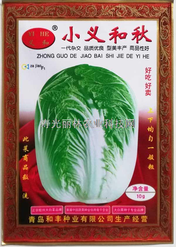 秋大白菜种子-小义和秋白菜种子