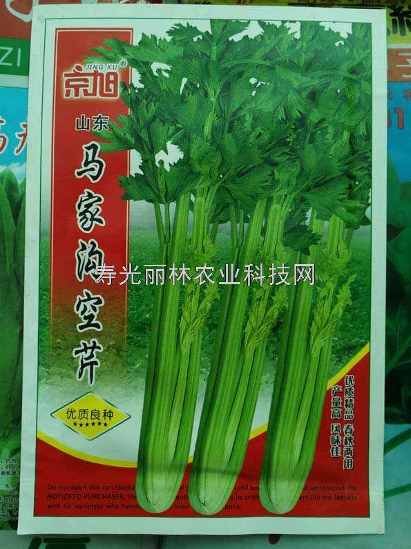 马家沟空芹种子-绿色空心芹菜种子