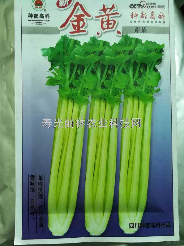 金黄芹菜种子-黄杆芹菜种子