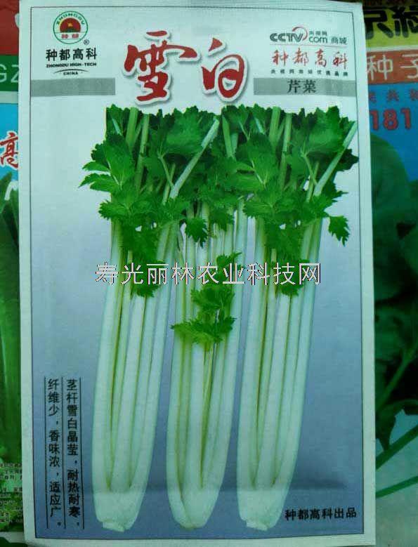 种都雪白芹菜种子-白色空芹种子