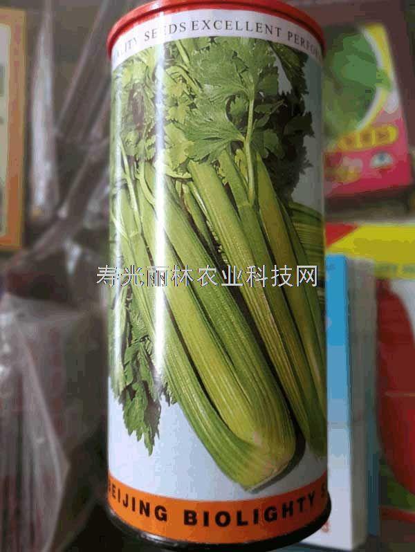 进口西芹种子-文图拉芹菜种子-进口芹菜种子