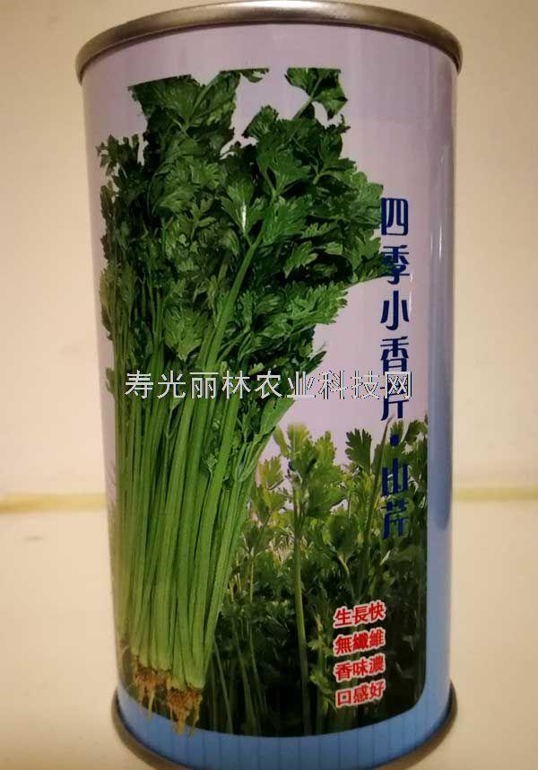 四季小香芹种子-山芹种子-小芹菜种子