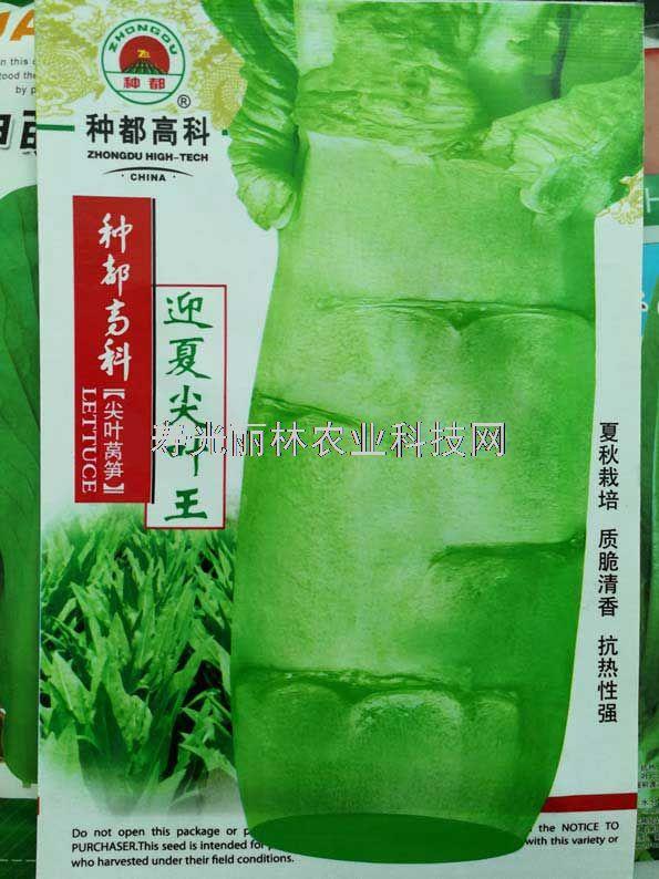 耐热莴笋种子-种都迎夏尖叶王莴笋种子