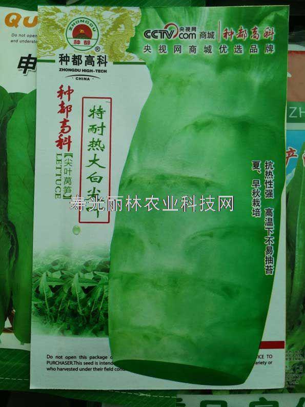 耐热莴笋种子-种都特耐热大白尖叶莴笋种子