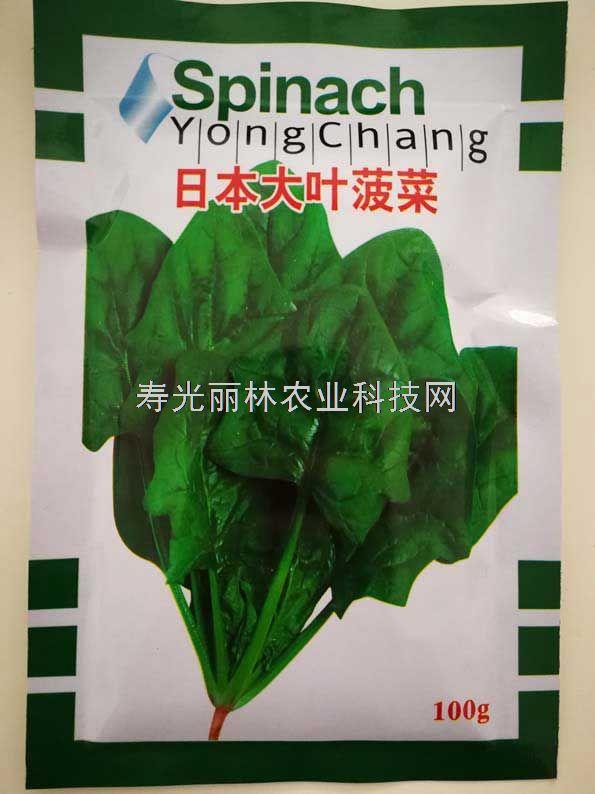 日本大叶菠菜种子