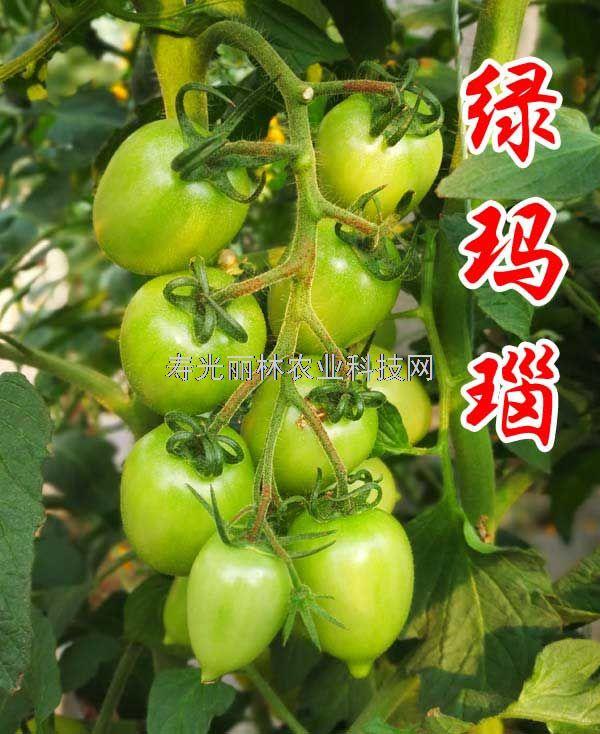 好吃的绿色小番茄种子-绿玛瑙-绿色口感西红柿种子