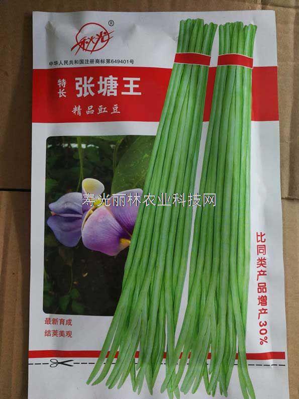 高产豇豆种子-特长张塘王豇豆种子-白绿条豇豆种子