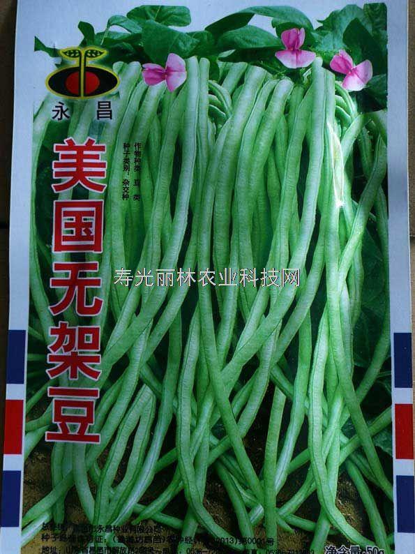 高产无架豆种子-美国无架豆种子