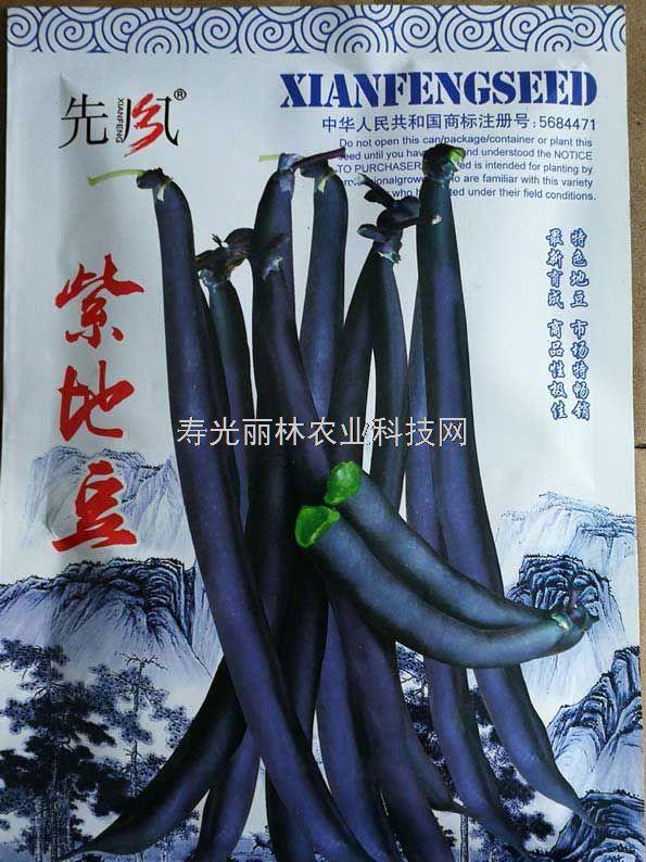 紫色豆角种子-紫地豆豆角种子
