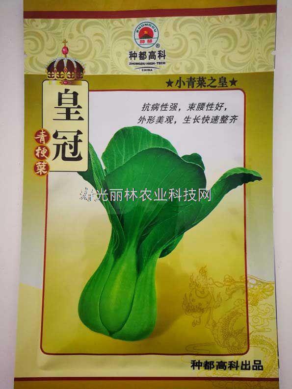 皇冠青梗菜种子