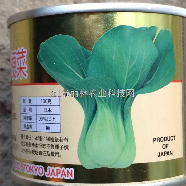 进口青梗菜种子-耐热青梗菜种子-日本华冠青梗菜种子
