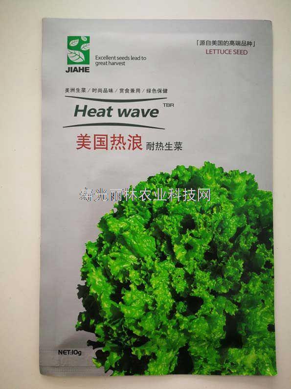 耐热生菜种子-美国热浪生菜种子