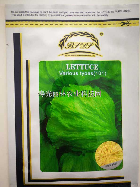 进口结球生菜种子-耐热结球生菜种子-射手101结球生菜种子