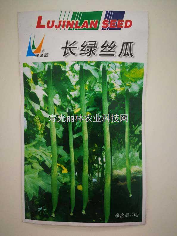 特长丝瓜种子-长绿丝瓜种子