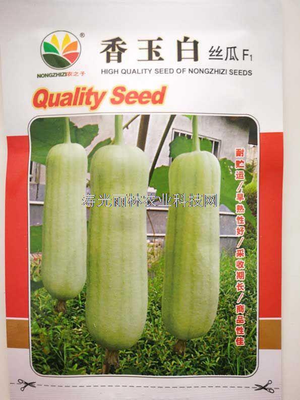 短肉丝瓜种子-香白玉丝瓜种子