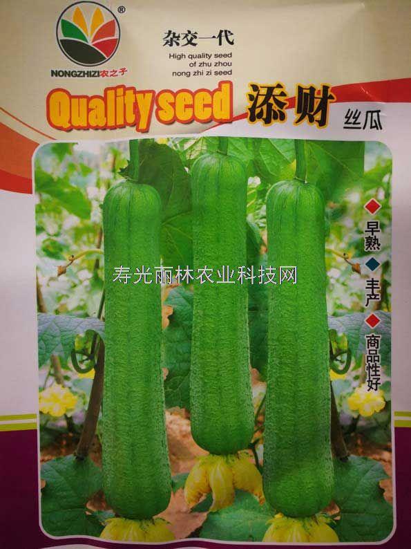 绿色肉丝瓜种子-添财肉丝瓜种子