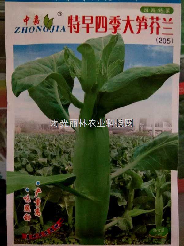 高产芥兰种子-特早四季大笋芥兰种子