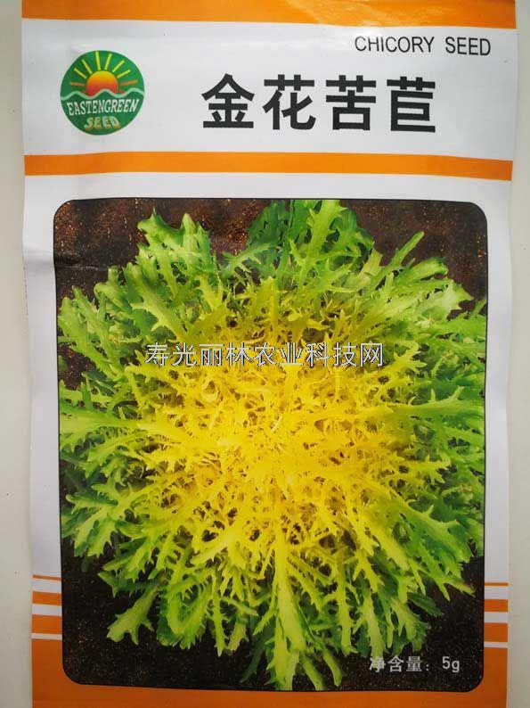 黄心苦苣种子-金花苦苣种子
