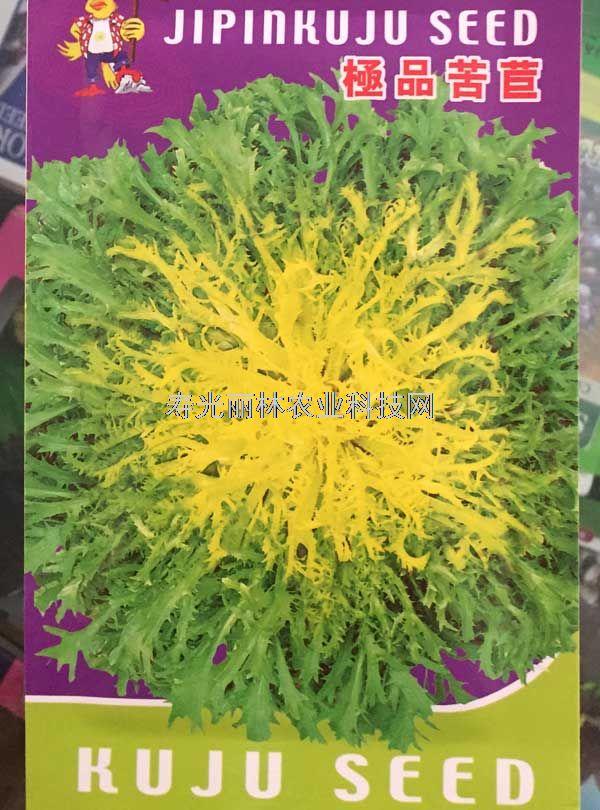 黄芯苦苣种子-极品苦苣种子