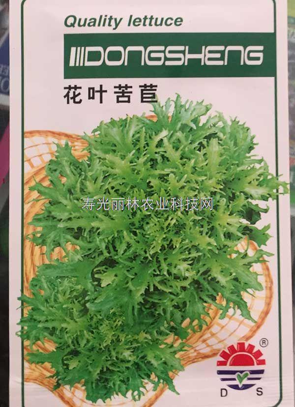 苦苣种子-花叶苦苣种子