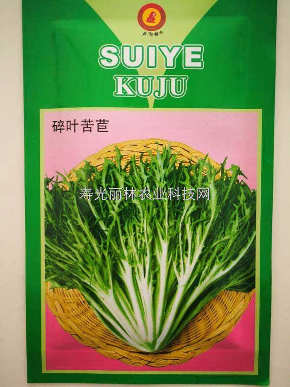 苦苣种子-碎叶苦苣种子