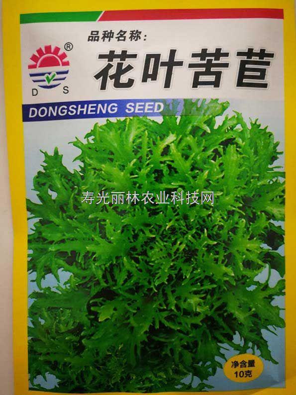 高产苦苣种子-花叶苦苣种子