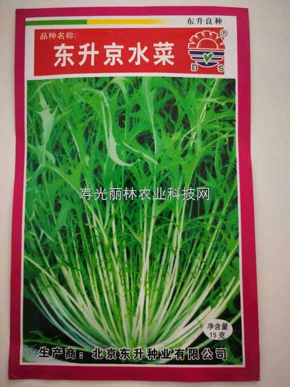 京水菜种子-东升京水菜种子