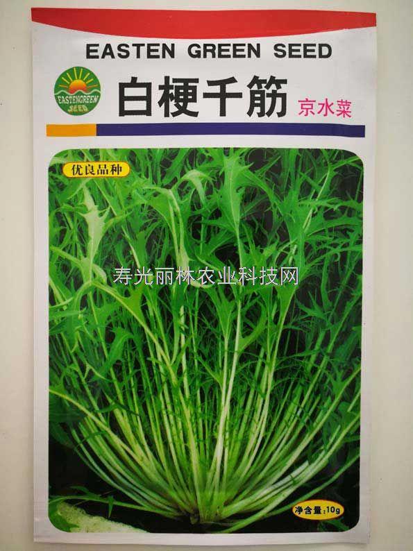 京水菜种子-白梗千筋京水菜种子