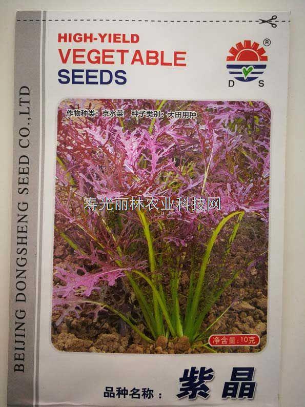 紫色京水菜种子-紫晶京水菜种子