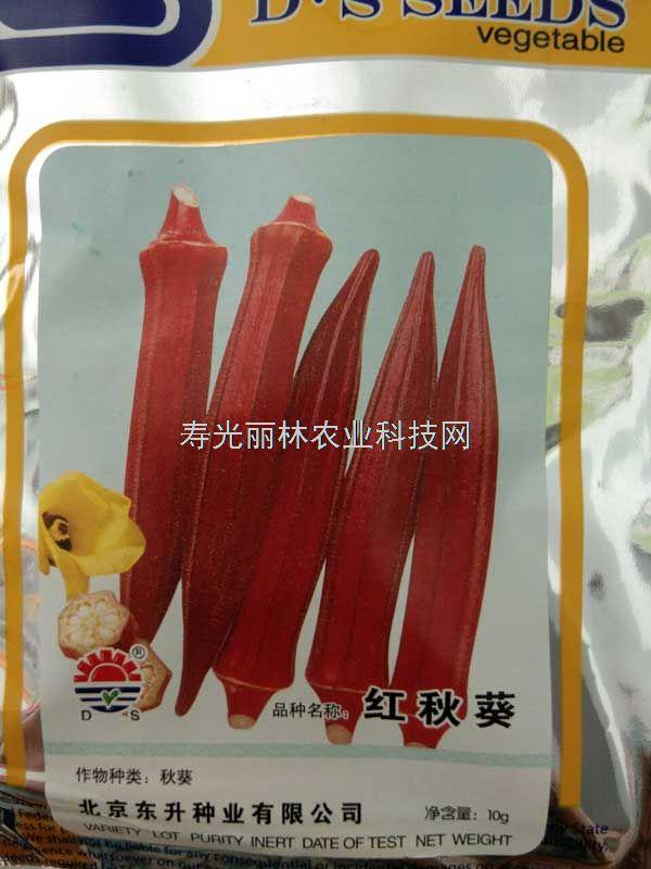 好吃的红秋葵种子-东升红秋葵种子