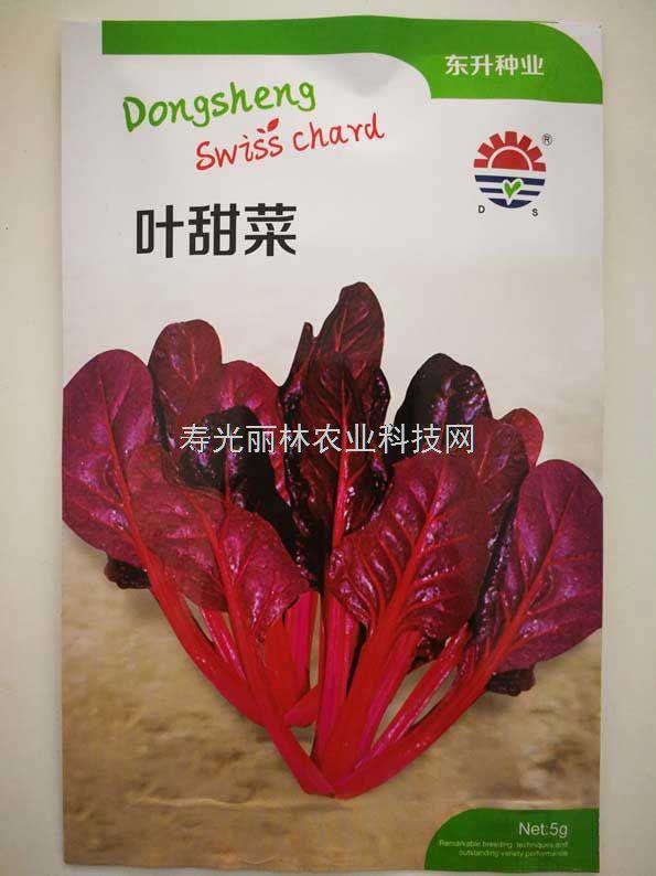 红叶甜菜种子-东升叶甜菜种子