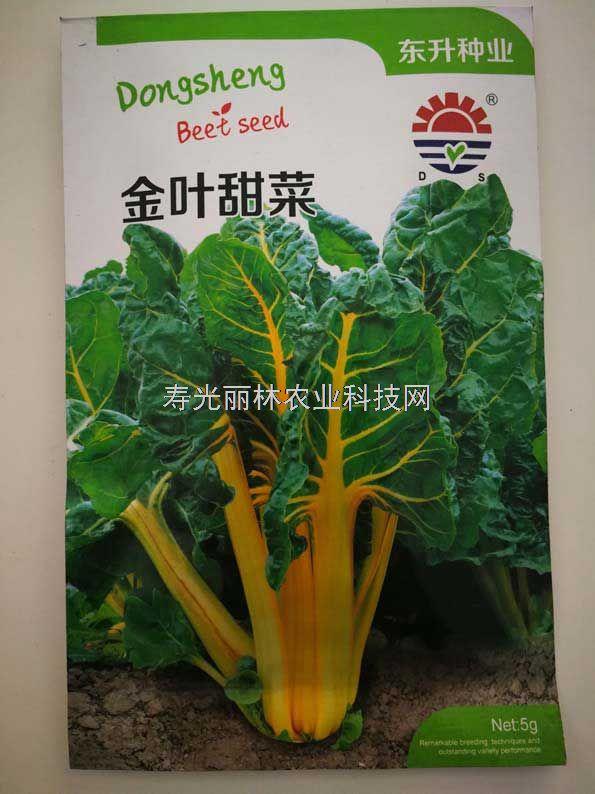 黄叶甜菜种子-金叶甜菜种子