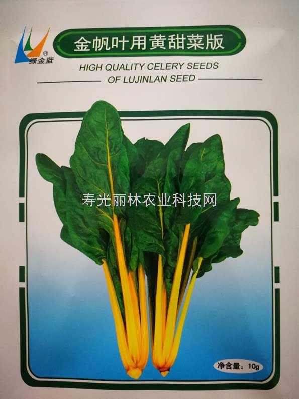 黄叶甜菜种子-金帆叶用黄甜菜种子