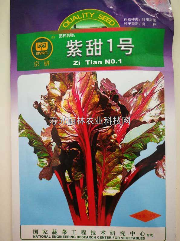 紫叶甜菜种子-紫甜一号紫叶甜菜种子