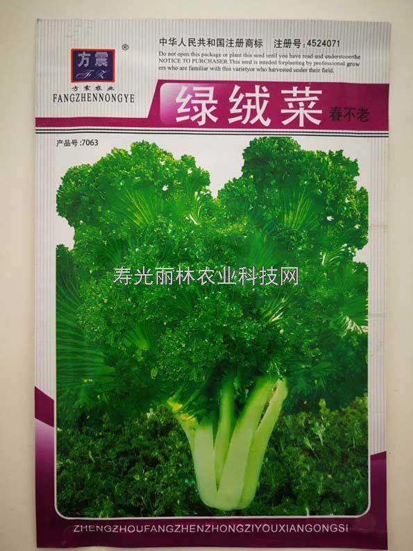 绿绒菜种子-春不老种子