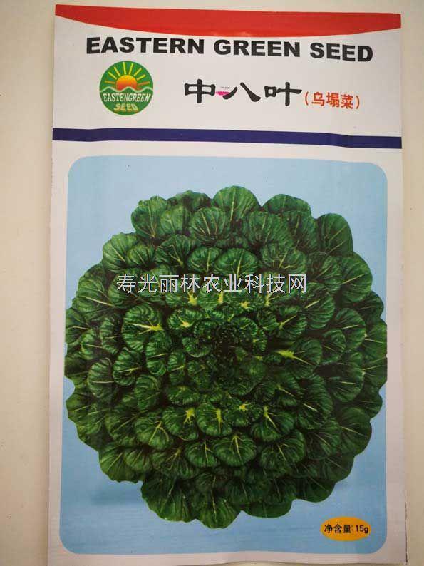 乌塌菜种子-中八叶种子