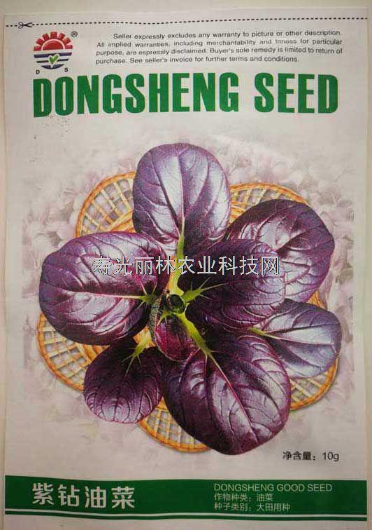 紫油菜种子-紫钻油菜种子