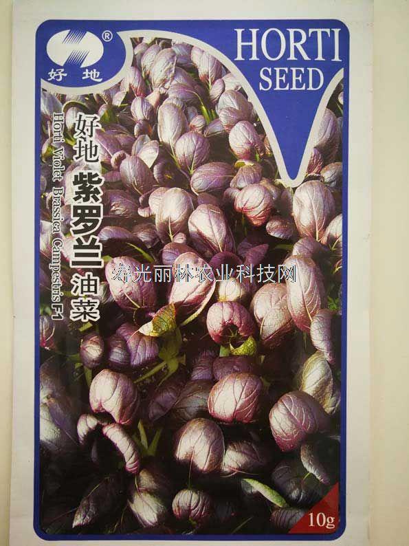 紫油菜种子-紫罗兰油菜种子
