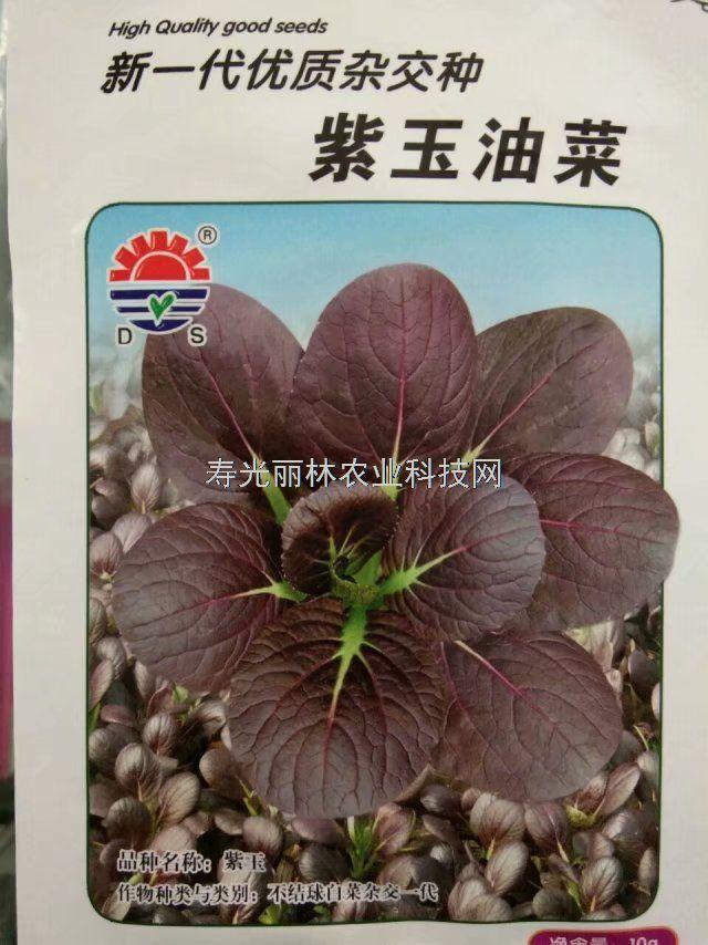 紫油菜种子-紫玉油菜种子