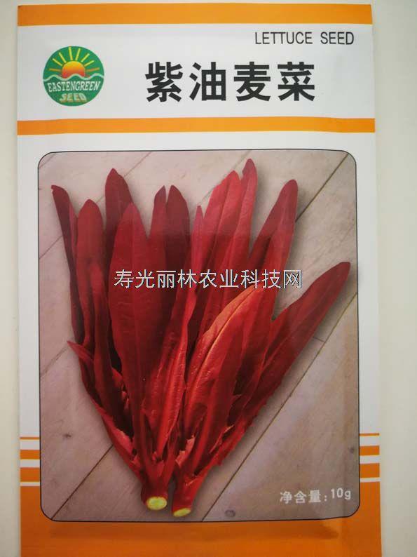 油麦菜种子-紫油麦菜种子
