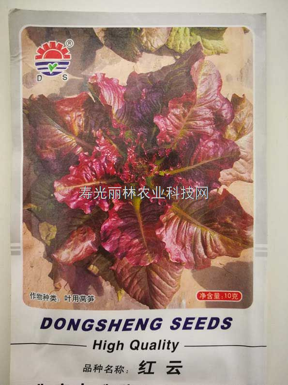 红色散叶生菜种子-红云叶用莴笋种子