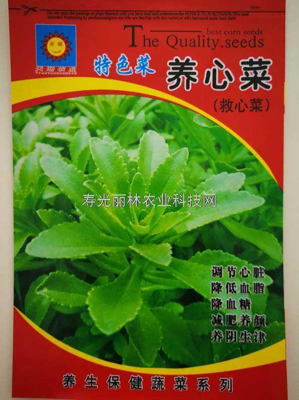 特色蔬菜种子-养心菜种子-救心菜种子