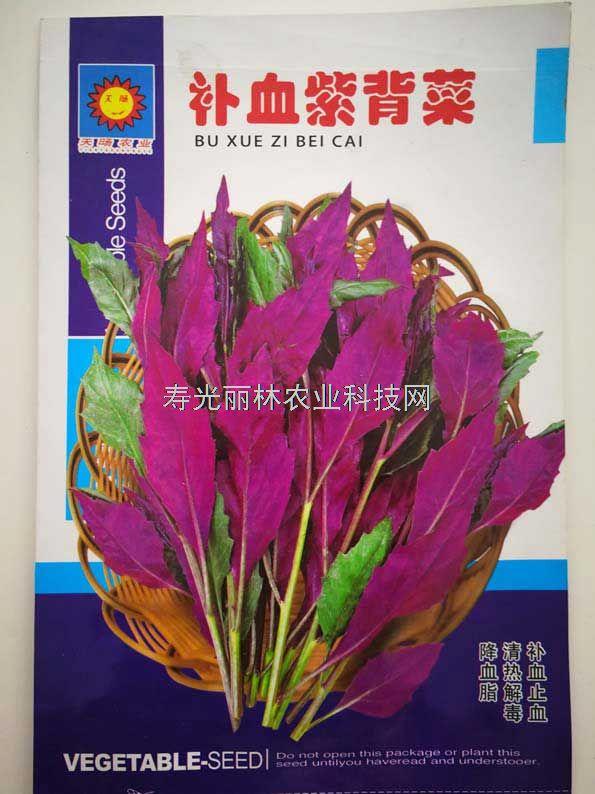 特色蔬菜种子-补血紫背菜种子-紫背天葵种子