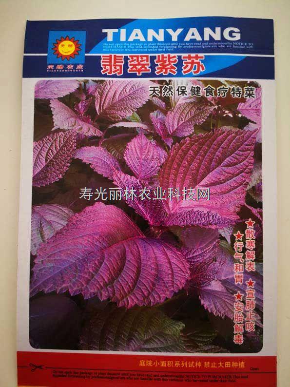 紫苏种子-翡翠紫苏种子